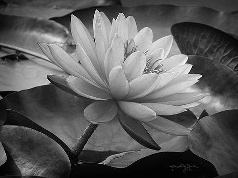 In a Mermaid's Garden - Monochrome Version by Karen Casey-Smith