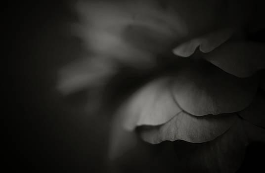 In Darkness... by The Art Of Marilyn Ridoutt-Greene