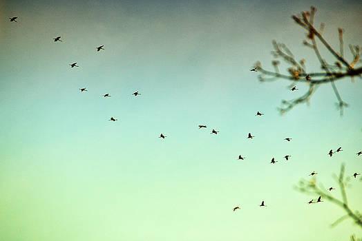 In Flight by Heather Bridenstine
