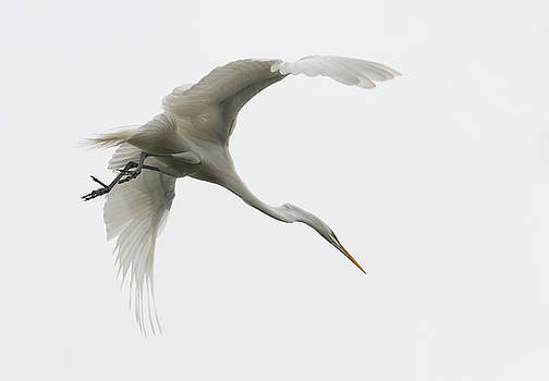 In Flight VI by Linda Dyer Kennedy