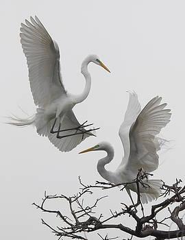 In Flight VII by Linda Dyer Kennedy