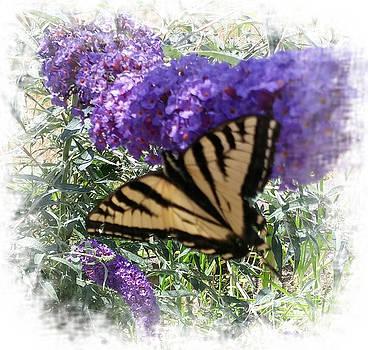 In My Garden by Sandra Maddox