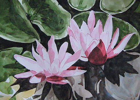 In pond by Akhilkrishna Jayanth