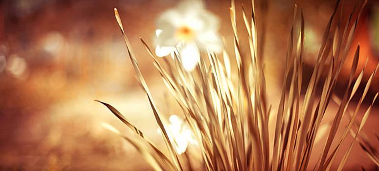 Jenny Rainbow - In Spring Garden. Impressionism