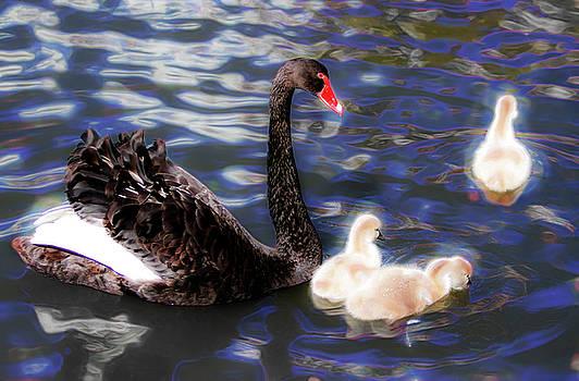 In Swan's Dream by Miroslava Jurcik