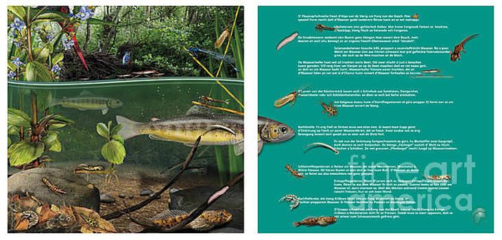 In The Creek - nature interpretation panel  - naturlehrtafel - schautafel - natuur informatiepanel by Nature-Interpretation-Panels - Naturlehrtafeln - S Maassen-Pohlen