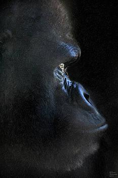 In the Dark by David Millenheft