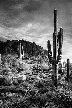 In The Desert Golden Hour in Black and White  by Saija Lehtonen