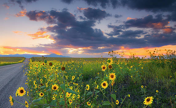 In The Evening Light by Tim Reaves