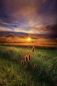 In the Eye of the Beholder by Phil Koch