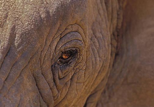 Sandra Bronstein - In The Eye of the Elephant