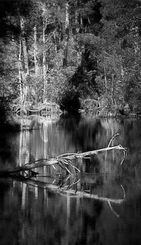 In the quiet by Allen Beilschmidt