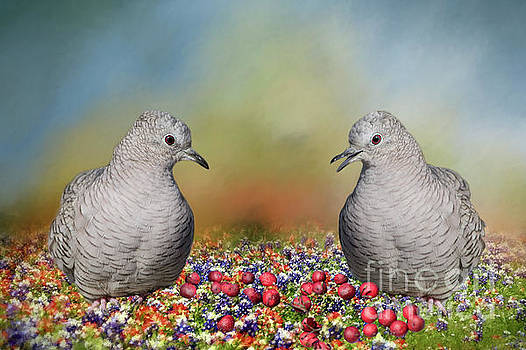 Inca Doves by Bonnie Barry