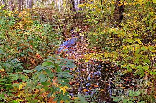 Indian Summer in the U.P. by Jaunine Roberts
