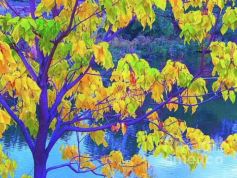 Indigo Autumn by Ann Johndro-Collins