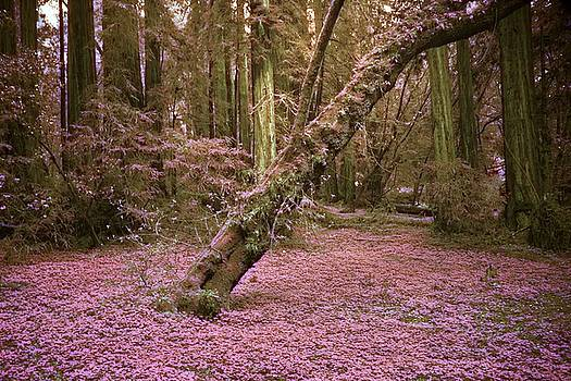 Infrared Forest Floor by Suzanne Stout