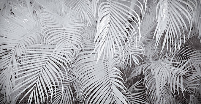 Adam Romanowicz - Infrared Palm Abstract