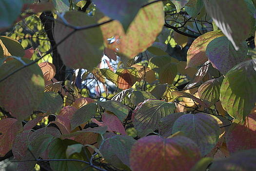 Inner Dogwood Fall by Michele Myers