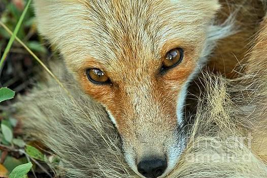 Adam Jewell - Inquisitive Eyes