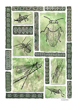 Insects of Hawaii I by Diane Thornton