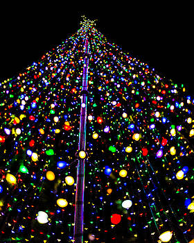 Inside a Christmas Tree #4 by Brent Paape