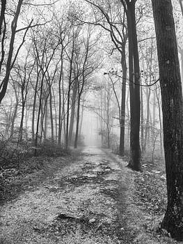 Into the fog black and white by Luis Lugo