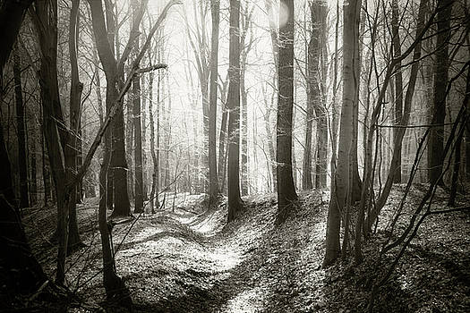 Into the Forest - Nr. 1 by Dorit Fuhg