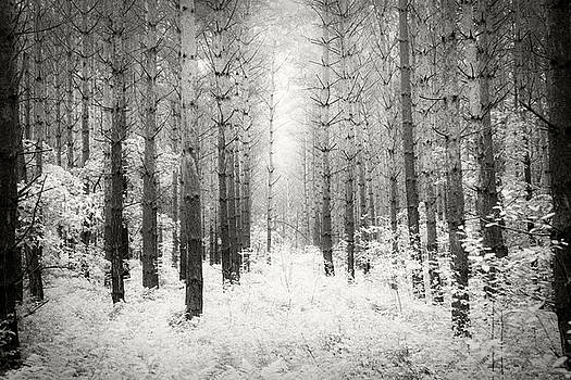 Into the Forest - Nr. 3 by Dorit Fuhg