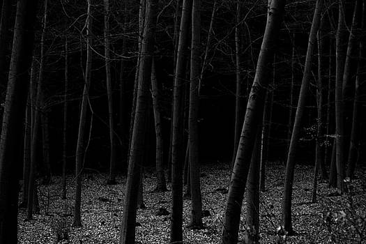 Into the Forest - Nr. 6 by Dorit Fuhg