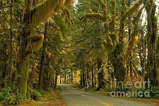 Adam Jewell - Into The Hoh Rainforest