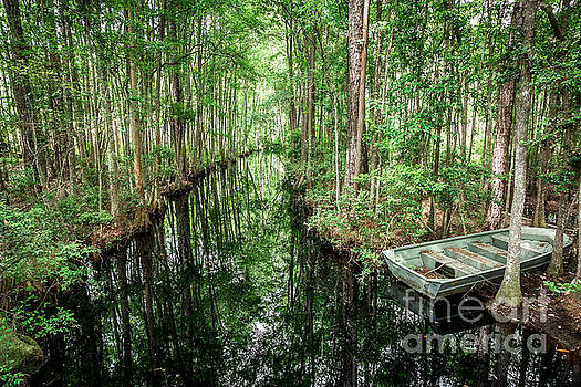 Into the Swamp by Joan McCool