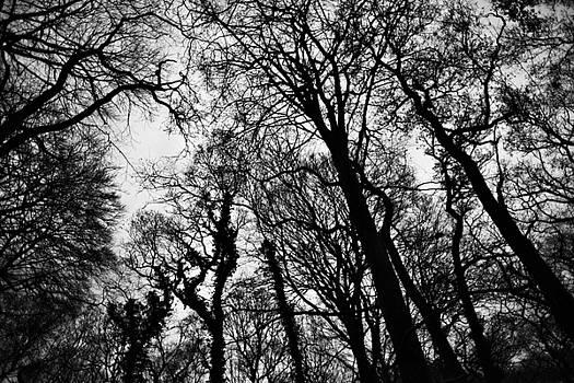 Steven Poulton - Into the Woods