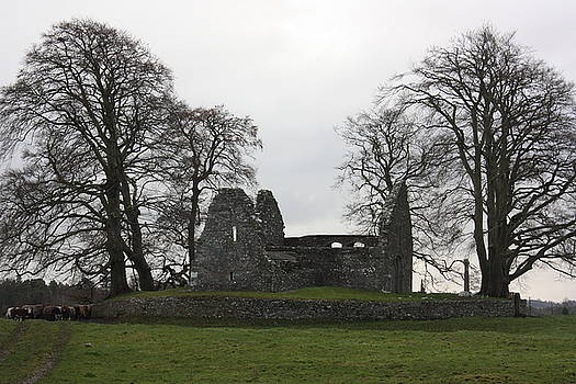 Yvonne Ayoub - Ireland Monaincha Abbey