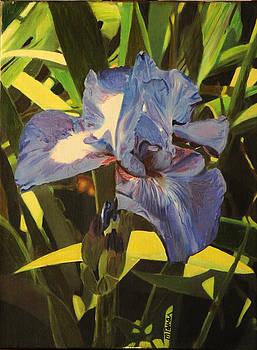 Iris 10 by Margaret Farrar