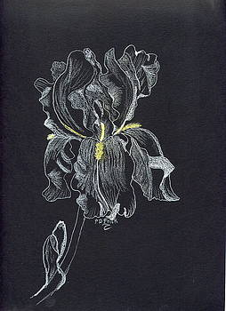 Iris-a Study In White by Diane Frick