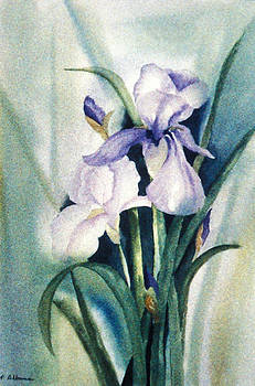 IRIS a watercolor painting of a beautiful flower by Phil Albone