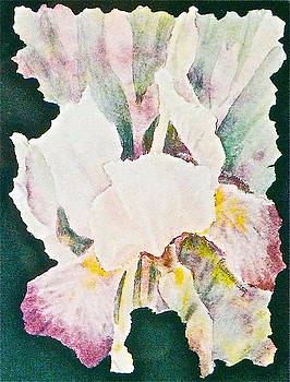 Iris and Buds by Carolyn Rosenberger