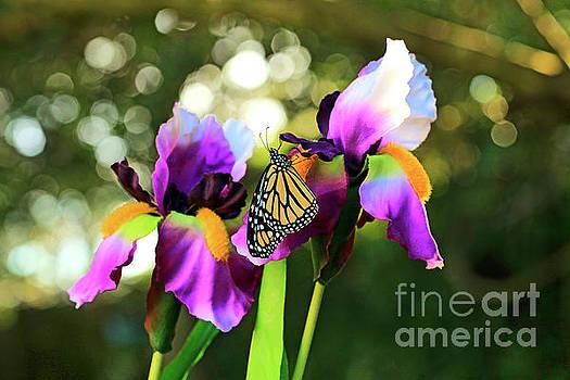 Iris and Butterfly Photo by Luana K Perez