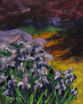 Iris Bed in Twilight by Ken Fiery
