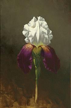 Iris by Cody DeLong