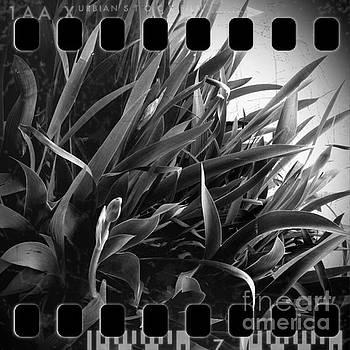 Iris Foliage BW by Greg Kopriva