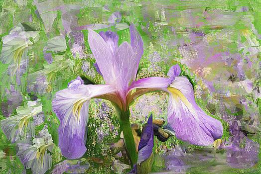 Iris illusion  by Don Wright