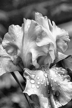 Iris in black and white by Bonnie Willis