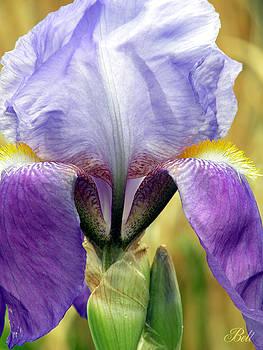 Christine Belt - Iris in Spring