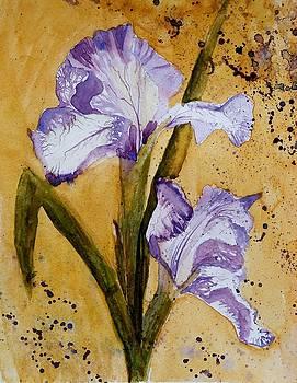 Iris by Lucia Del