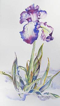 Iris Passion by Mary Haley-Rocks