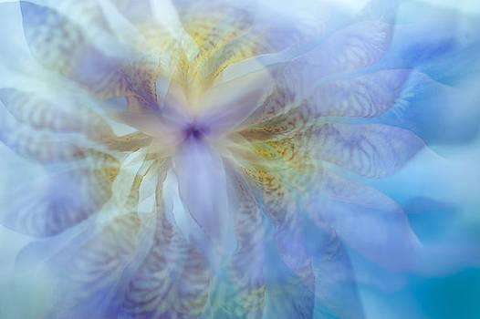 Jenny Rainbow - Iris Rhapsody. Blue