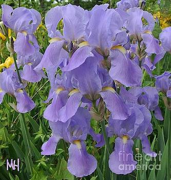 Irises And More by Marsha Heiken