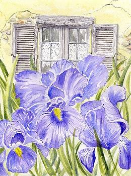 Irises and Old Lace by Frances Evans