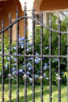 Diane Merkle - Iron Gate and Blue Flowers